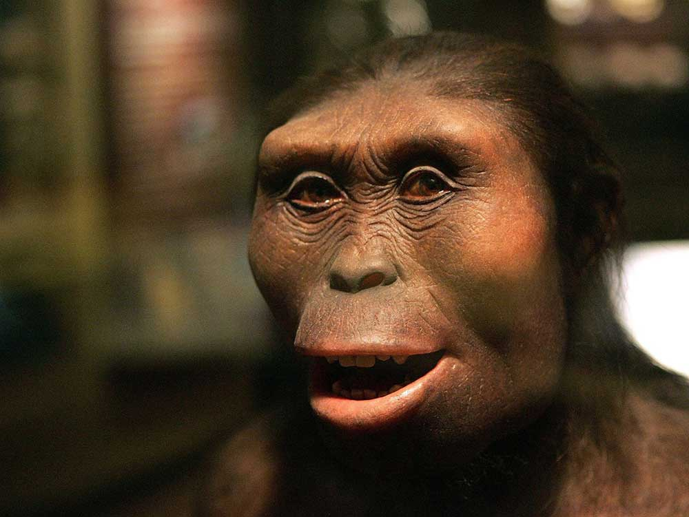 This Australopithecus afarensis known as 'Lucy' is estimated to have lived 3.2 million years ago, and is classified as a hominid.