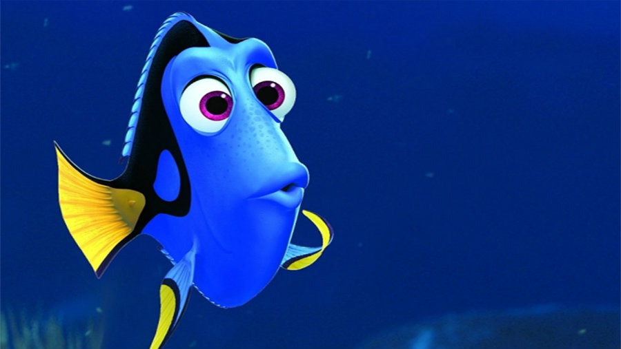For the first time, researchers at the University of Florida  have raised in captivity the Pacific Blue Tang fish, also known as Dory, like the little blue fish from Finding Nemo. Photo creidit: Pixar / Hollywood Reporter