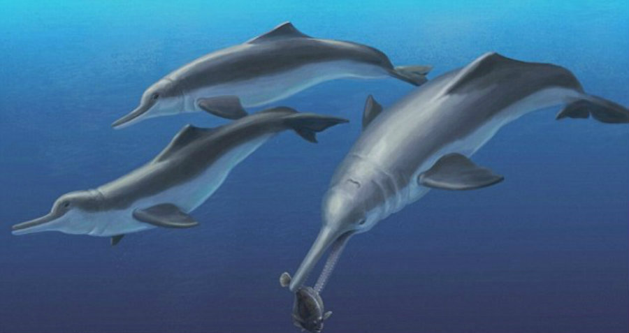 An artistic reconstruction of a pod of Arktocara yakataga, swimming offshore of Alaska. Image Credit: Daily Mail