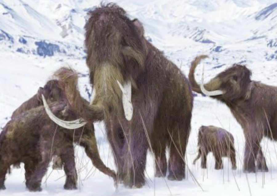 Researchers from the recent survey assure that the Earth was warming up, and the ice on the planet was melting. This caused sea levels to rise and the island where the mammoth's lived slowly reduced. Image Credit: IBT