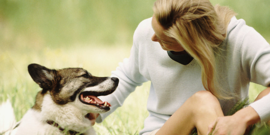 For decades, we humans have believed that our dogs reacted to the intonation of the words we spoke to them, rather than thinking dogs understood the words coming out of our mouths. Photo credit: Huffington Post / Bark Spot
