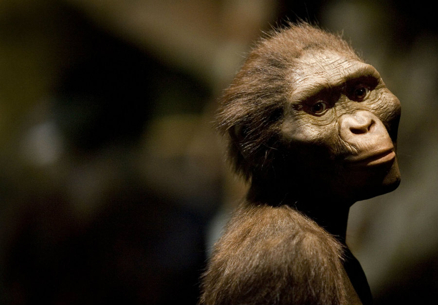 Forty percent of Lucy's skeleton was discovered in 1974 in Ethiopia, where the valuable pieces of this member of the species Australopithecus afarensis were usually kept. Photo credit: Dave Einsel / Getty Images / Independent