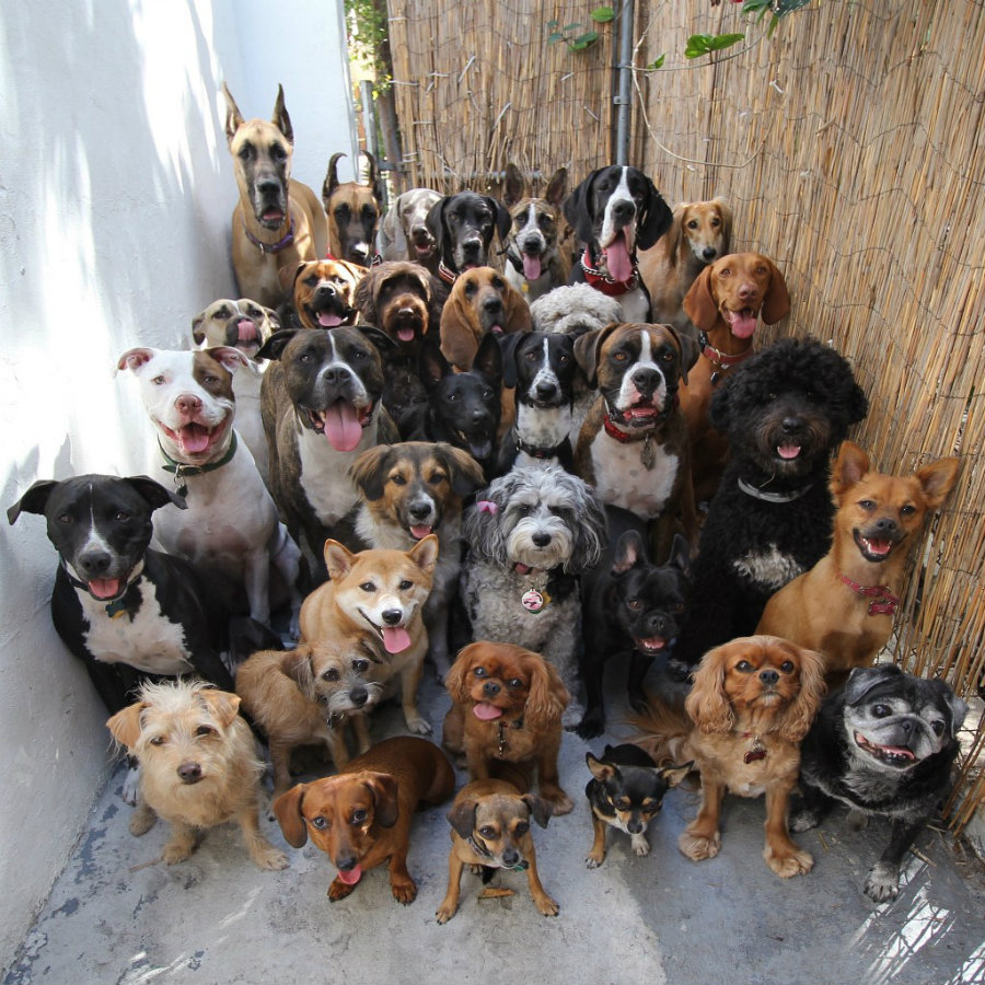 Every year, August 26, in the National Dog Day,  people is encouraged to celebrate with their dogs or to adopt one. Photo credit: Simple Thing Called Life