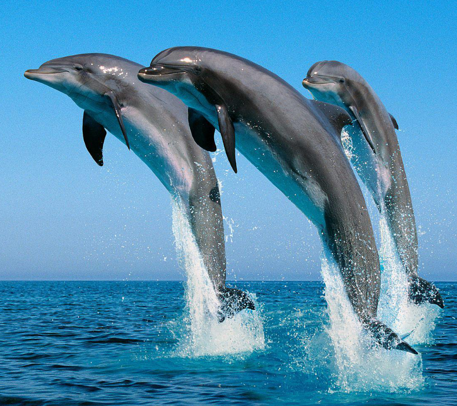 Russian scientists record dolphin conversation for the 1st time