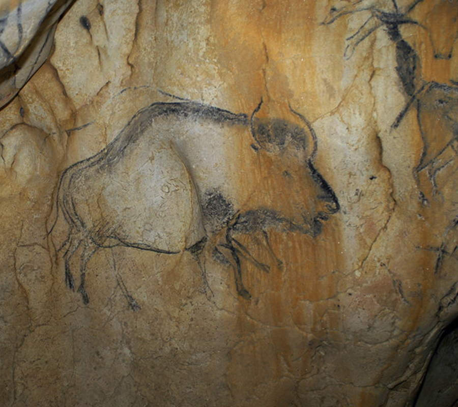 Bison painted in a cave