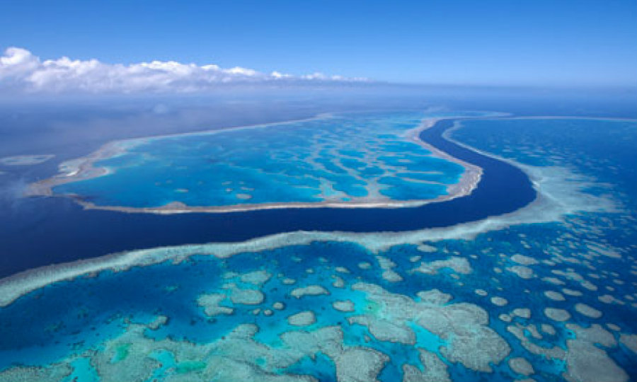The Great Barrier Reef is the world's largest coral reef system. Photo credit: First HD Wallpapers