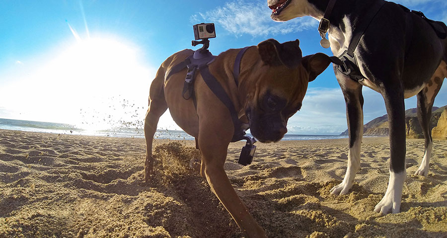 GoPro announces restructuring, updates on holiday sales