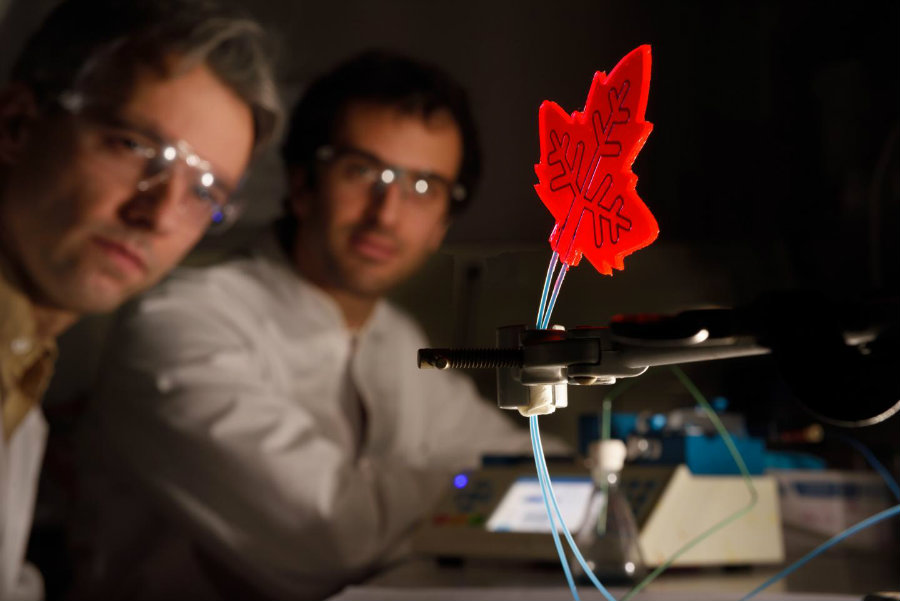 The artificial leaves work using sunlight to make molecules react, making it possible to create drugs anywhere around the world. Photo credit: Bart van Overbeeke / EurekAlert!