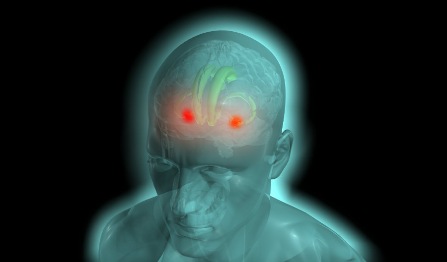 The amygdalae are two almond-shaped structures located in the temporal lobes of the brain of many vertebrates. Photo credit: Stringtownambassadors.com