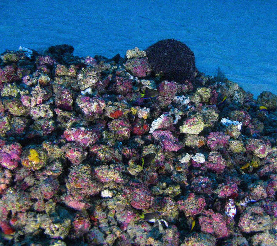Amazon Coral Reef