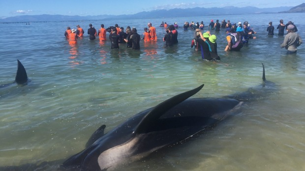 Whales in New Zealand