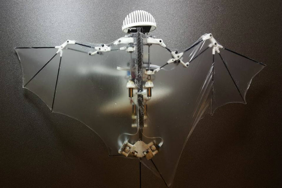 Bat Bot (B2) can reproduce the flight of a biological bat. Image credit:  Ramezani, Chung, Hutchinson, Sci. Robot. 2, EAAL2505 (2017) / The Wall Street Journal