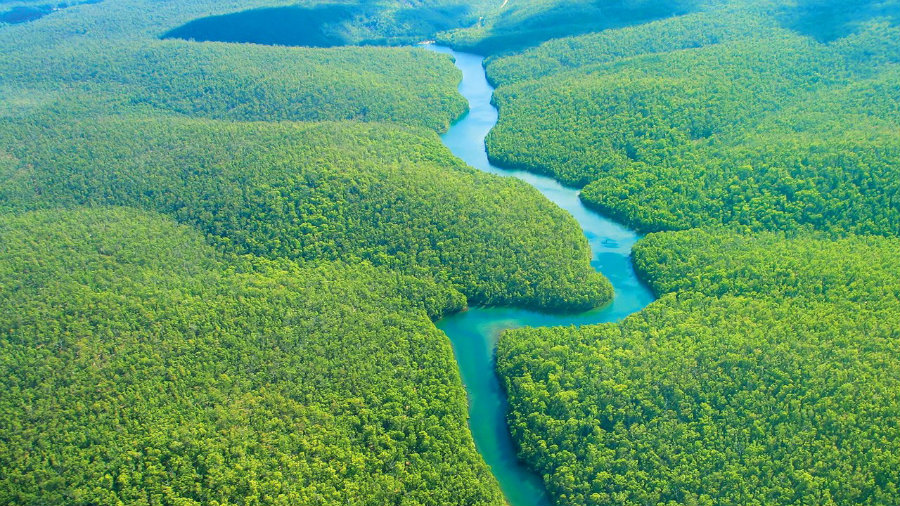 Humans Shaped the Amazonian Rainforest
