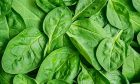 A group of scientists was able to convert a spinach leaf into a piece of working human heart tissue. Image credit: Shutterstock / 6ABC