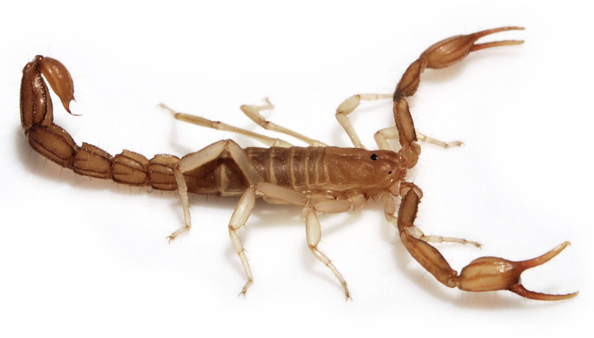 Live Scorpion found in spinach bag