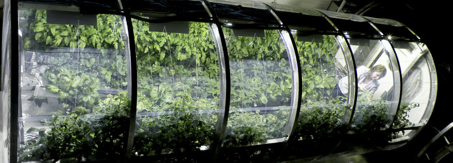 The Prototype Lunar/Mars Greenhouse project will support current research in space to cultivate and grow vegetables for food, as well as growing plants to sustain life support systems. Image credit: Designboom