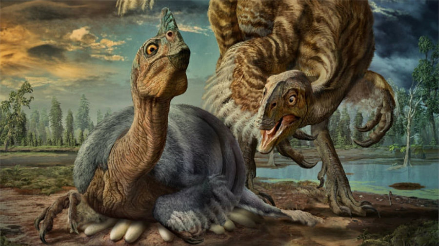 In the late 1990s, Zelenetisky and her research team had determined that Baby Louie was an oviraptorosaur. Image credit: Zhao Chuang