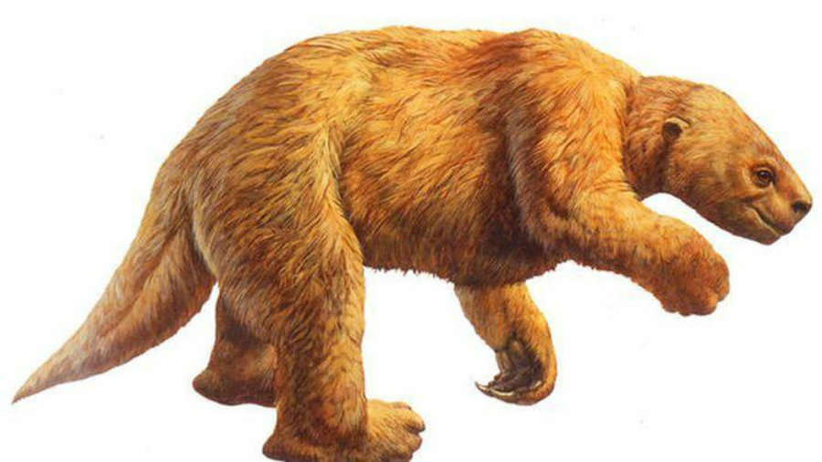 Giant ground sloths roamed North American around 11,000 years ago. Image credit: La Brea Tar Pits / LA Times