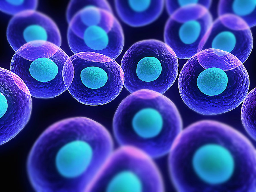 Stem cells are a really basic type of cells that can be molded and converted into other much-specialized cells. Image credit: Asymmetrex