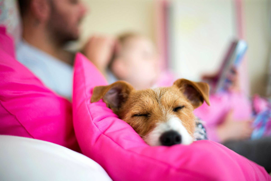 A dog in the bedroom can help you get a better sleep