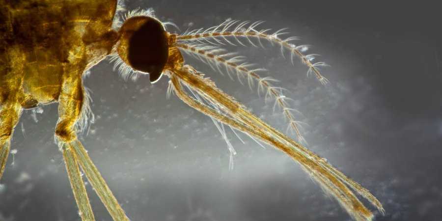 A recent study found climate change could wipe out a third of all Earth's parasites.