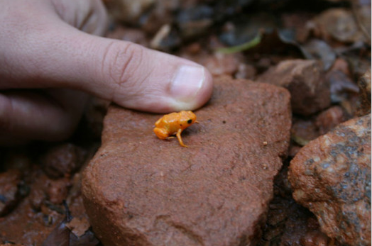 Tiny Frog 2