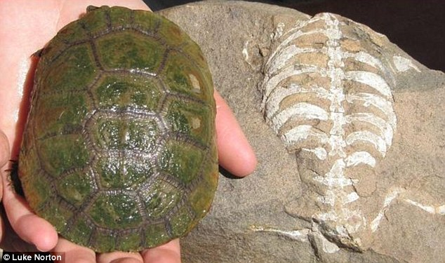 turtle's shell