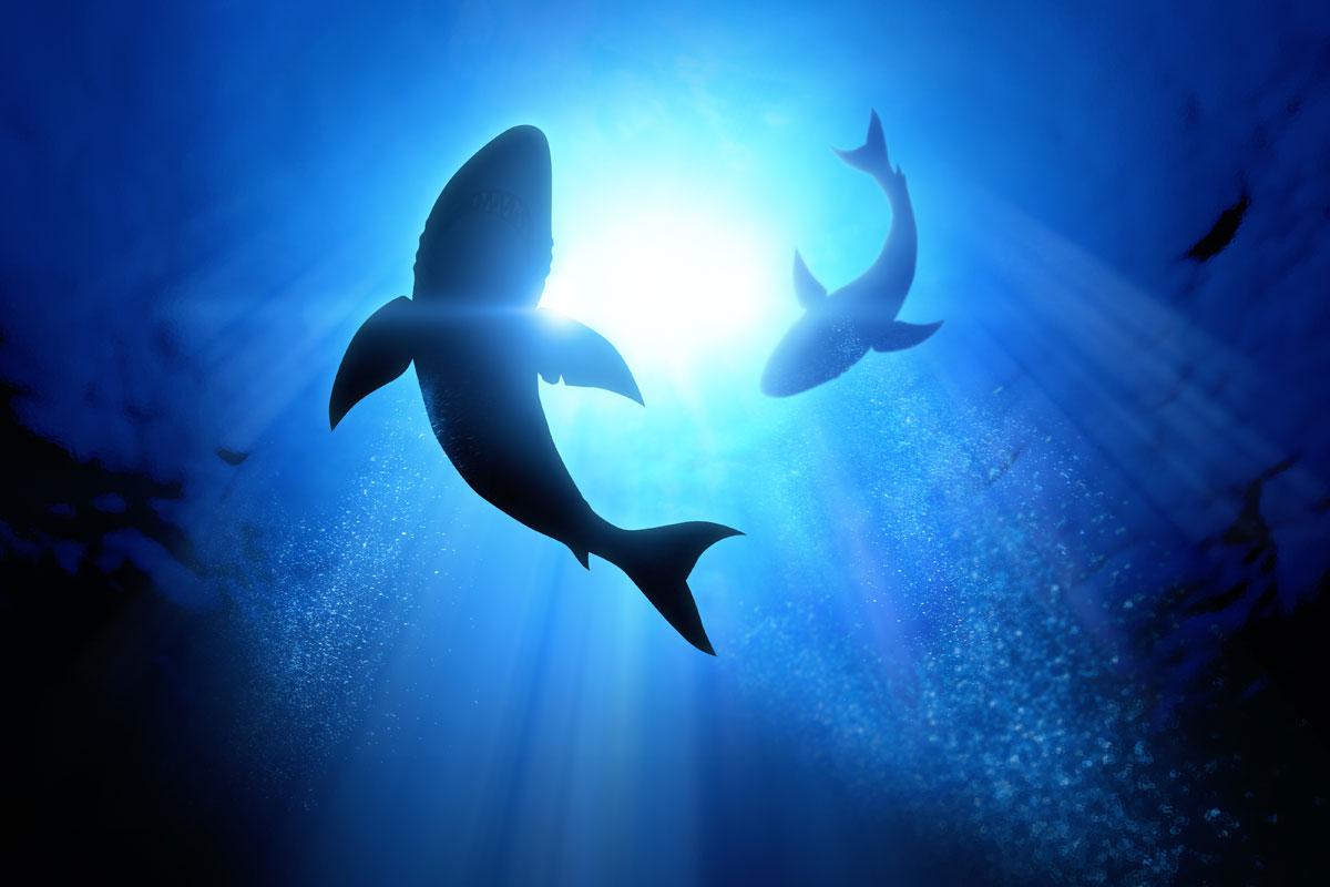 shark-population