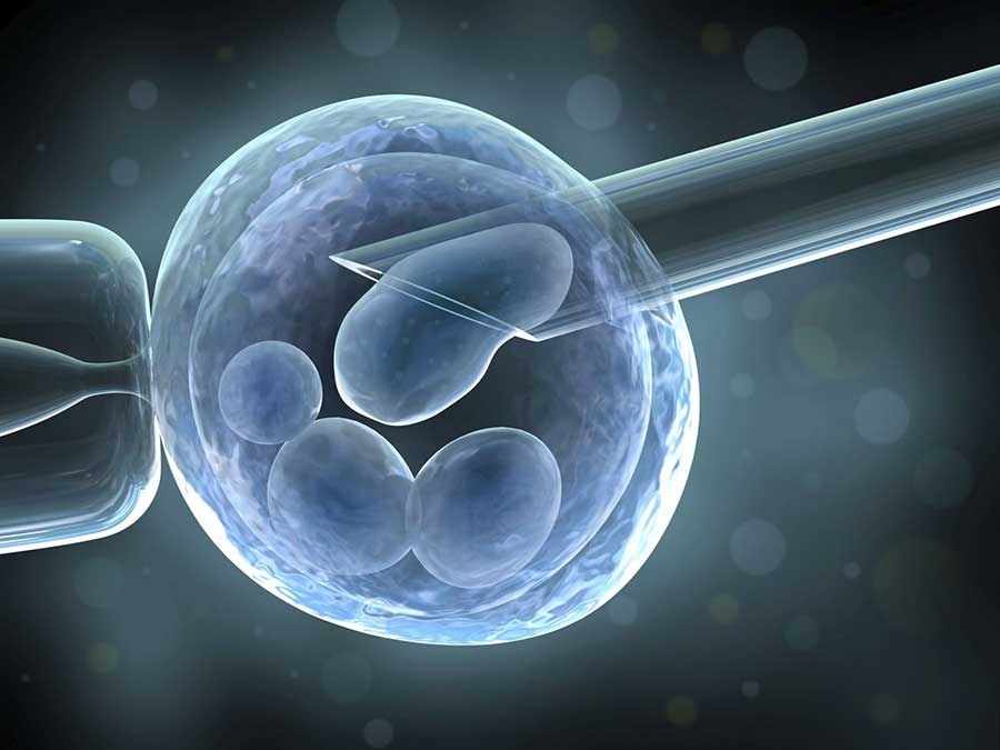 Use of oocytes donated for in vitro fertilization (IVF) has increased in recent years.1 Donated fresh oocytes traditionally have been used immediately, creating embryos for transfer into the uterus, with extra embryos being cryopreserved for later use. Image: Vitromed