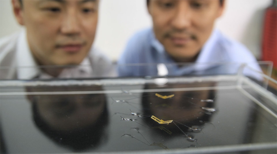 robotic-insect-jump-water