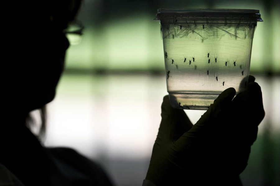Florida's health officials are conducting researches about a second possible Zika case spread by locally infected mosquitoes. Photo credit: Nelson Almeida / AFP / Getty Images / Time
