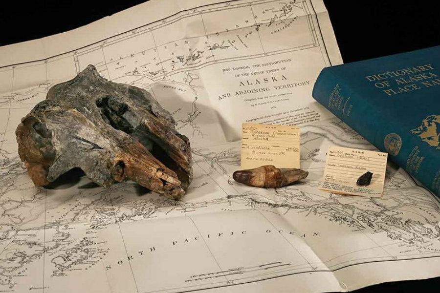 The skull of Akrtocara yakataga rests on an 1875 ethnographic map of Alaska. Image Credit: Smithsonian Mag