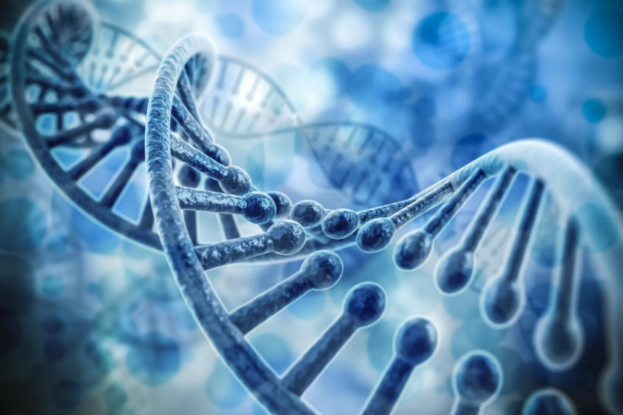 It is important to note, however, that RNA still 'exist', but not as the base of the genome, instead being a 'messenger' of the information inscribed in DNA, where it proceeds to 'carry' it to the protein-production center. Image Credit: Science Daily