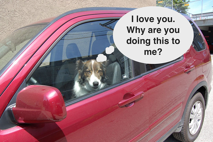 dog-hot-car