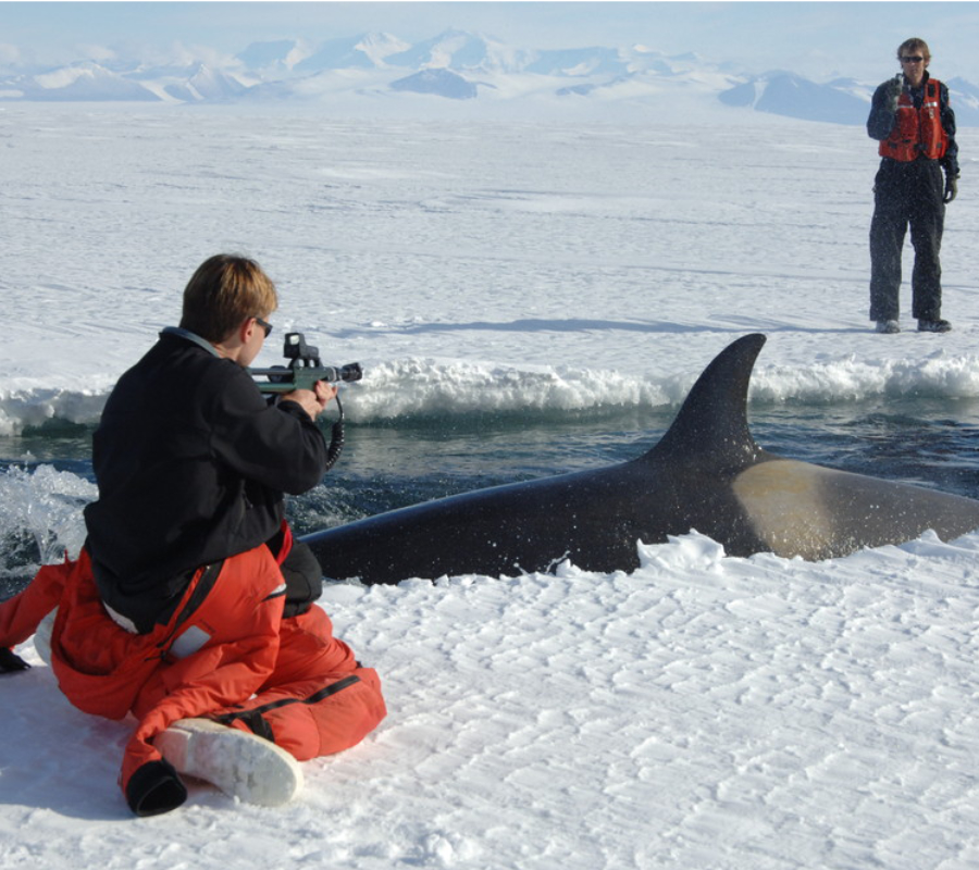 Orca GPS tracking