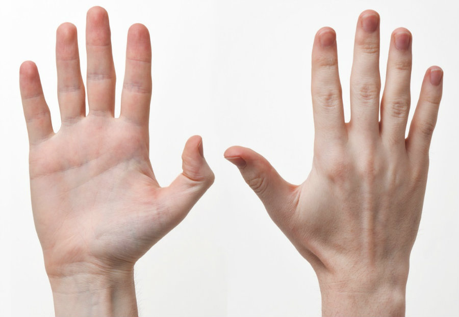 A study found the earliest evidence that human beings have been using their right hand because of early lateralization of the brain. Photo credit: HeritageDaily