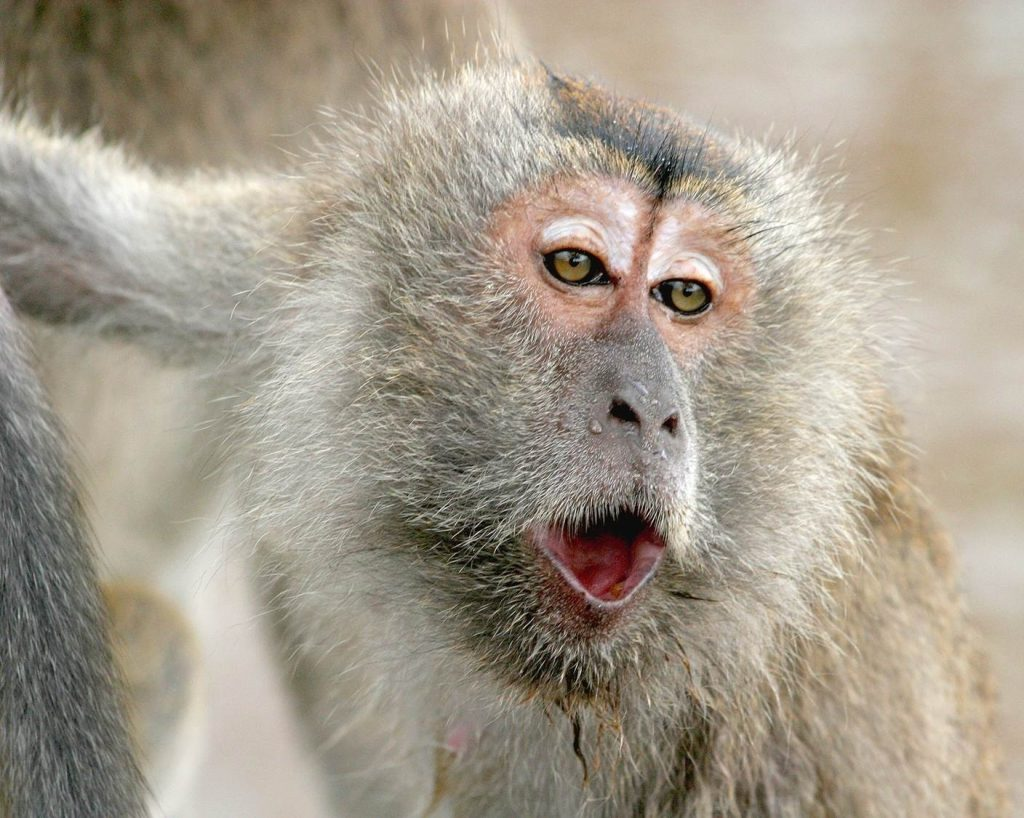 are apes capable of using the Continue the discussion by asking students if they think that the media portray the great apes  apes are capable of using abstract symbols and syntax to.