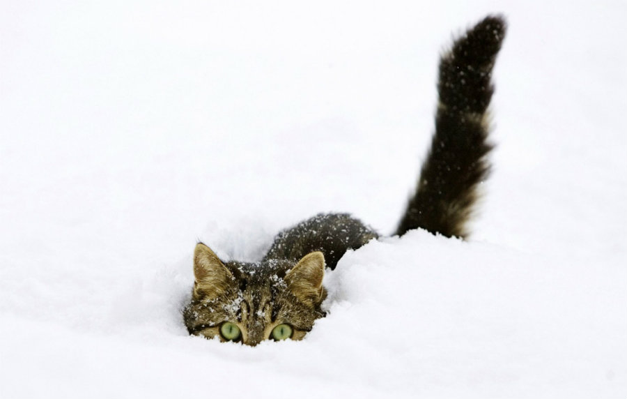 Freezing temperatures could affect pets and other animals, putting their lives at risk. Photo credit: Allwallpaper.in