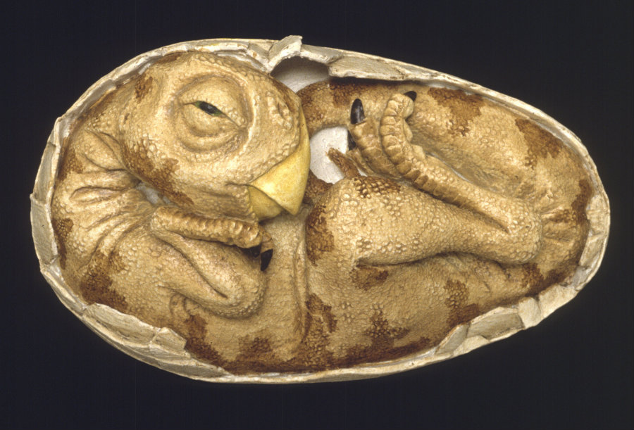 Apparently, dinosaur eggs took about three to six months to hatch. Photo credit: Waikato Museum