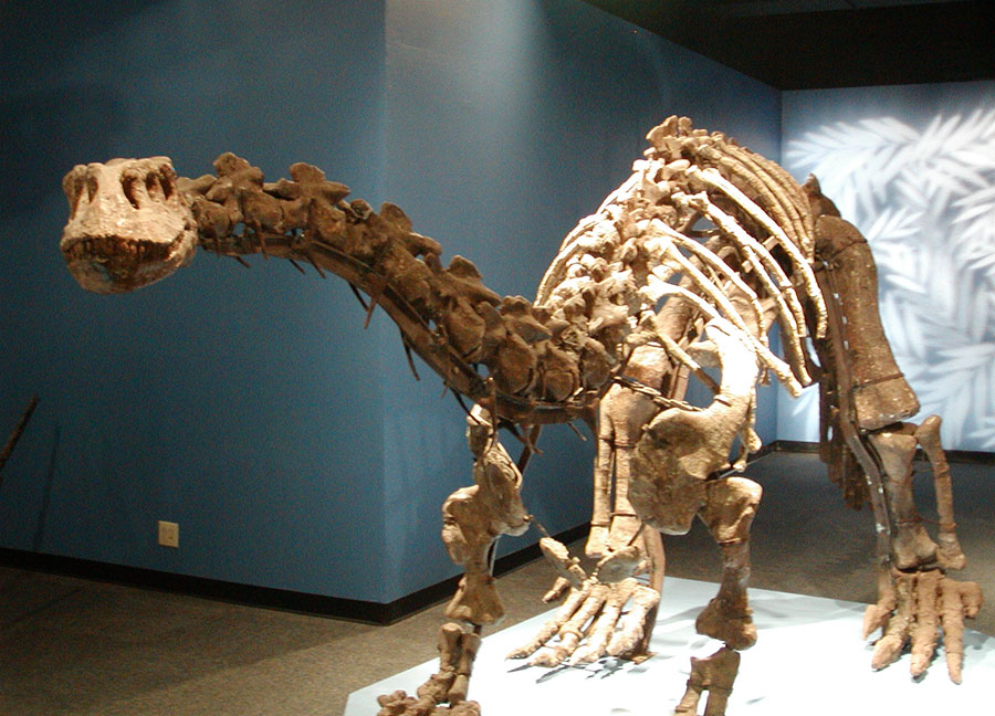 Lufengosaurus_fossils