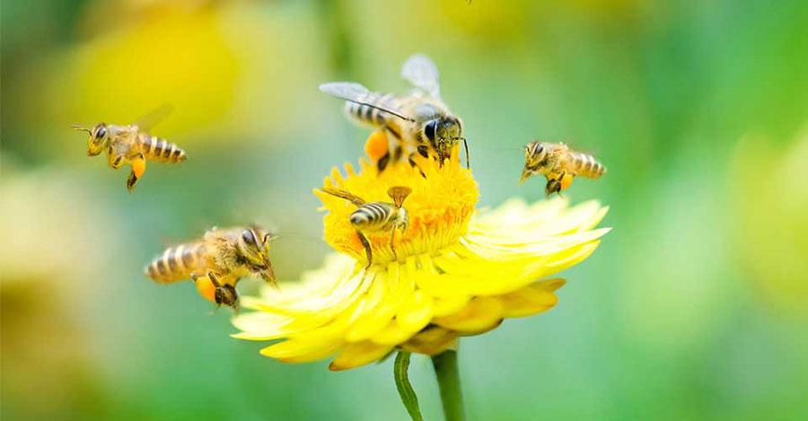 pollination-food-crops