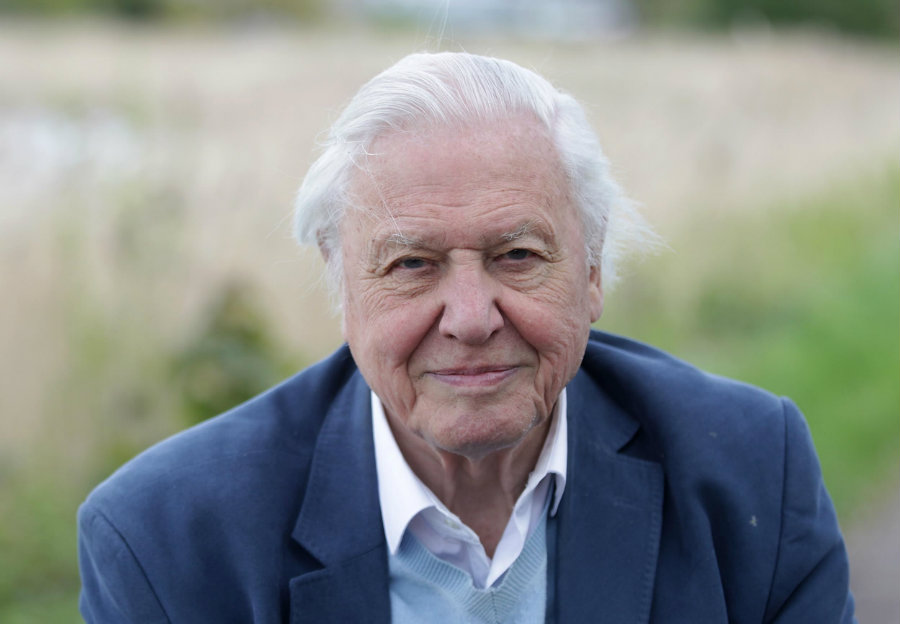 A new fossil is named after David Attenborough. Image credit: Independent