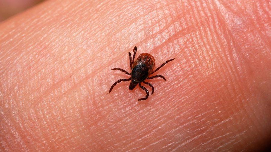 Ticks, Lyme Disease