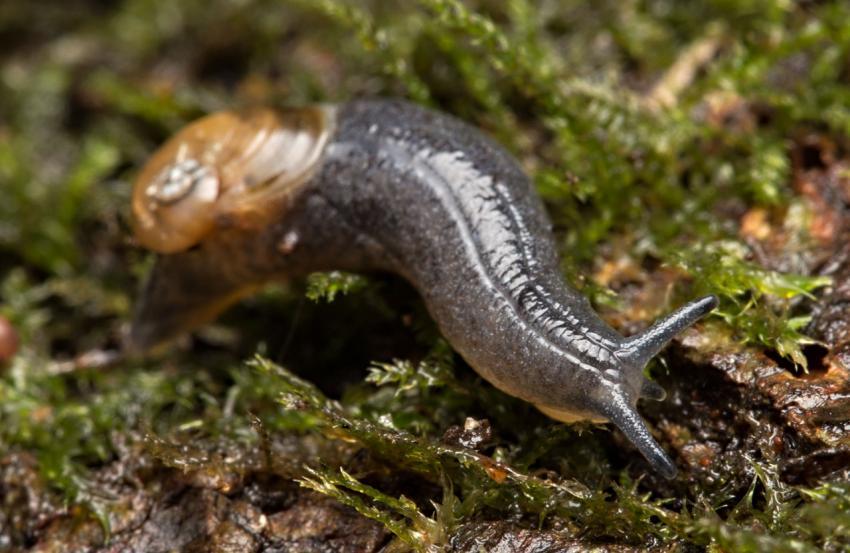 Semi-slug