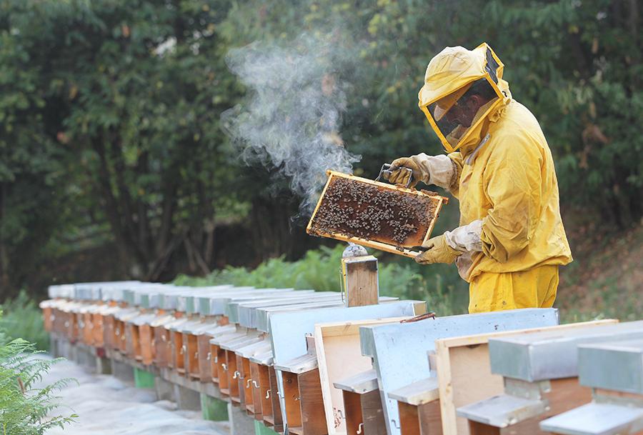 Beekepers
