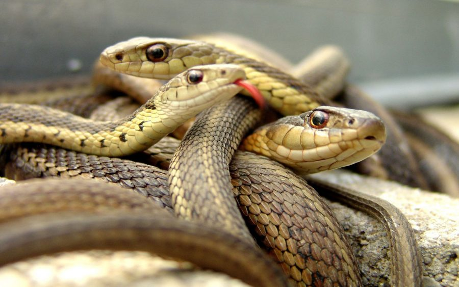 A group of snakes
