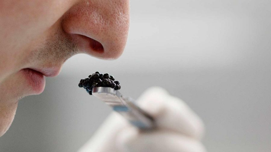 Human Sense of Smell