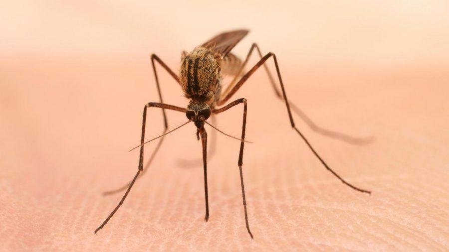 West Nile Virus