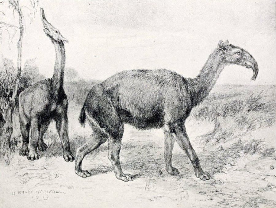 Macrauchenia patachonica was an animal that lived during the last ice age. Image credit: Wikipedia