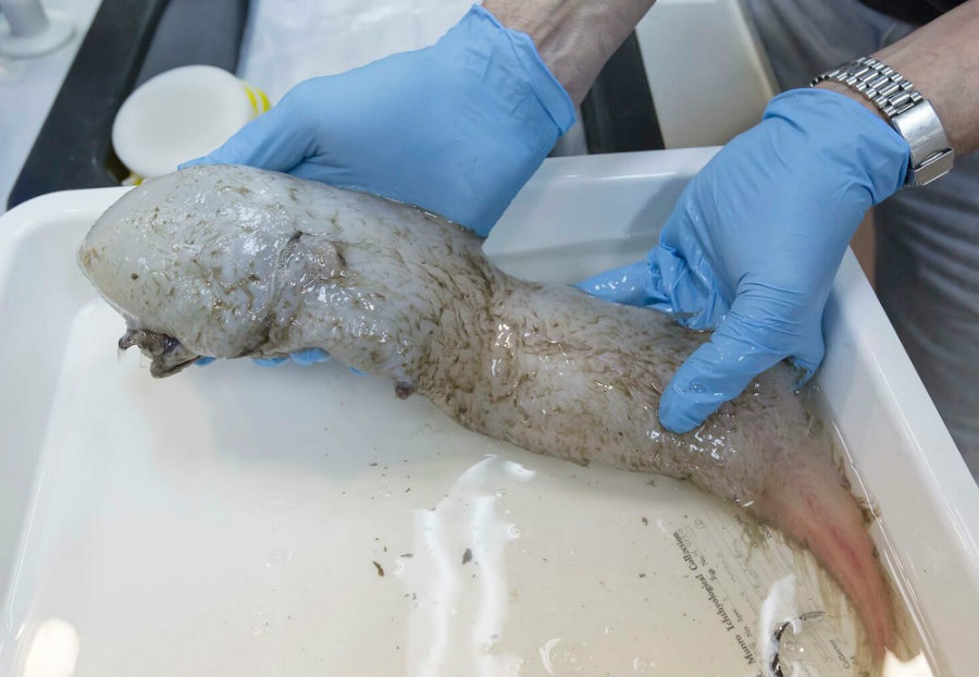 Faceless fish. Image credit: Rob Zugaro / Business Insider Australia